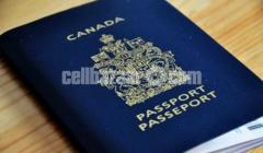 Good quality passport ,driver license ids and visa