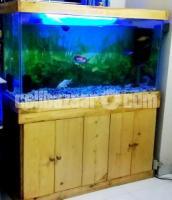 Aquarium Custom made