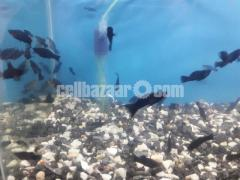 gappy fish - Image 1/5