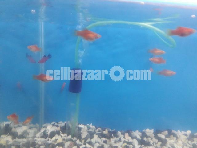 gappy fish - 2/5