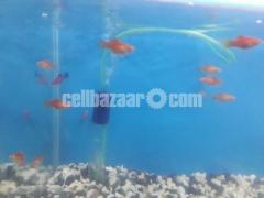 gappy fish - Image 2/5