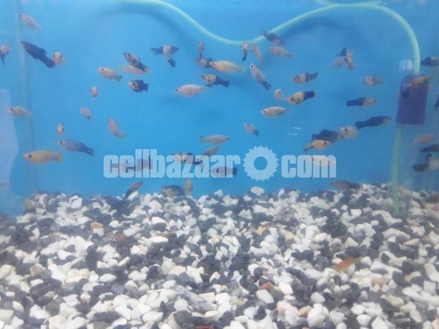 gappy fish - 3/5