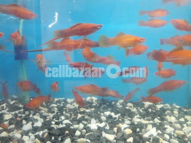 gappy fish - 4/5