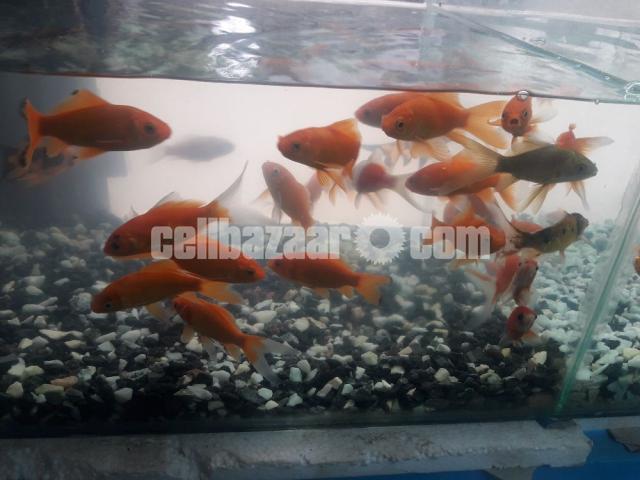 gappy fish - 5/5