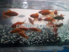 gappy fish - Image 5/5