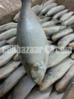 Formalin free, best quality fish in Chittagong