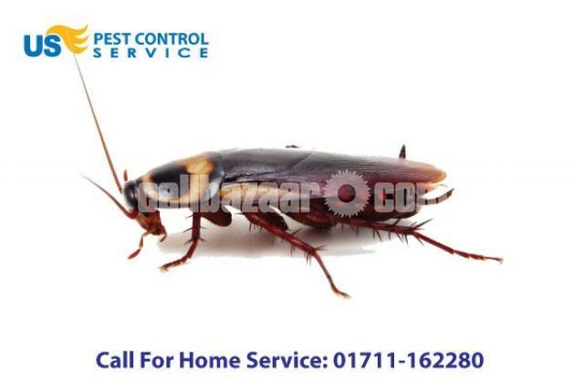 Cockroach Control Service - 1/5