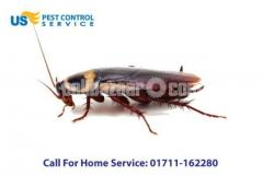 Cockroach Control Service - Image 1/5