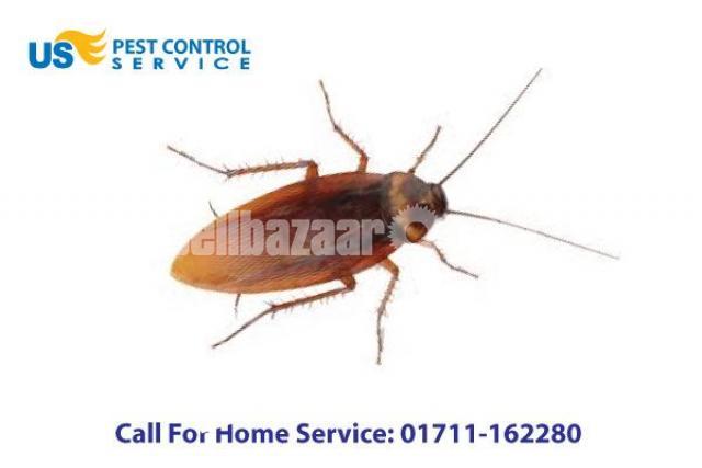 Cockroach Control Service - 2/5