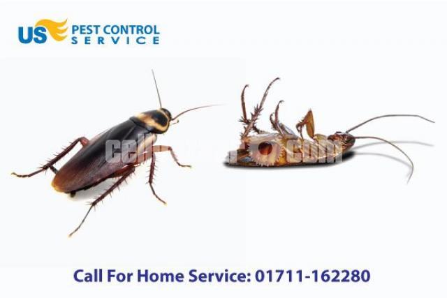 Cockroach Control Service - 3/5