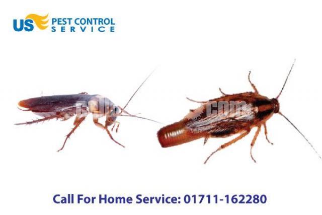 Cockroach Control Service - 4/5