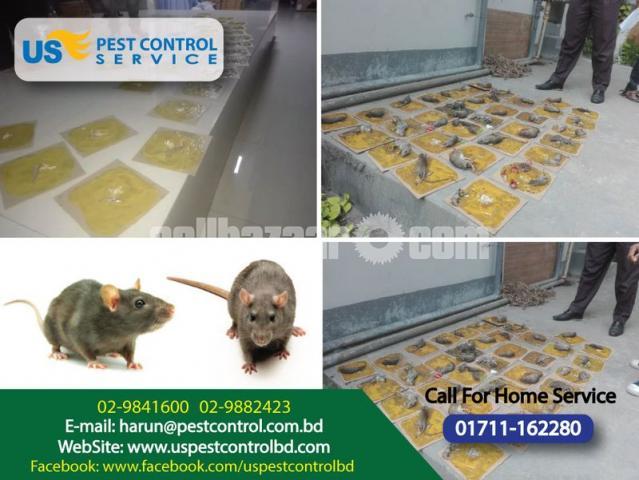 Rat Killed Glue Trap - 3/3