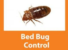 Bed bug and Cockroach Control