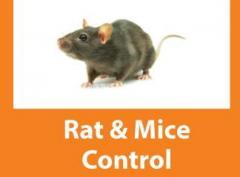 Termite & Rat Control Service