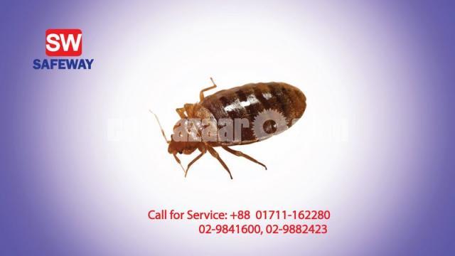 Bed Bug Control - 1/2