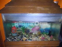 Aquarium Full Burnished set.