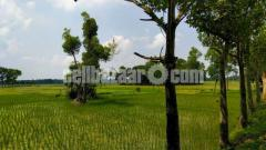 40-50 bigha land for sale at valuka