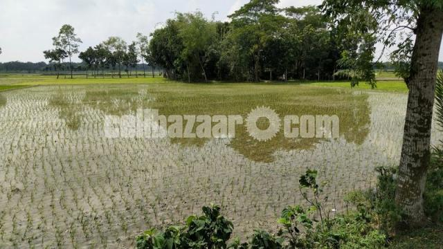 40-50 bigha land for sale at valuka - 2/2