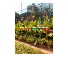 Gardening & Maintenances