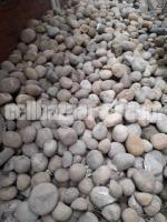 Stones / পাথর
