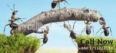 SM Pest Control Services CTG