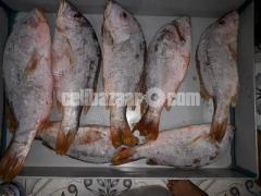 Safina sea fish