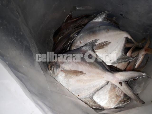 Safina sea fish - 2/7