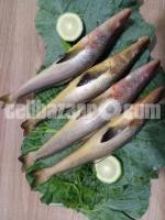 Safina sea fish - Image 4/7