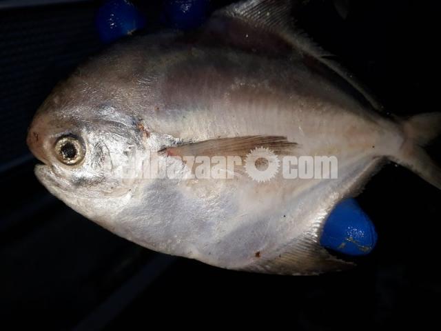 Safina sea fish - 7/7