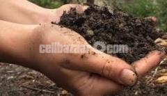 Ready Mix Soil – রেডি মাটি Potting