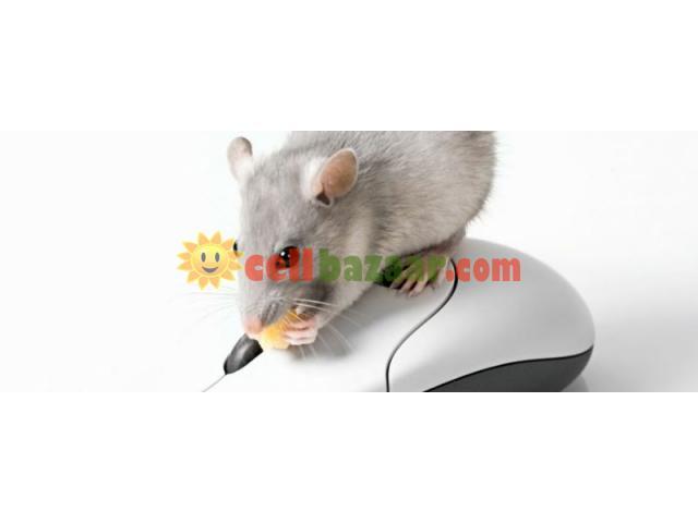 Rat Control - 1/1