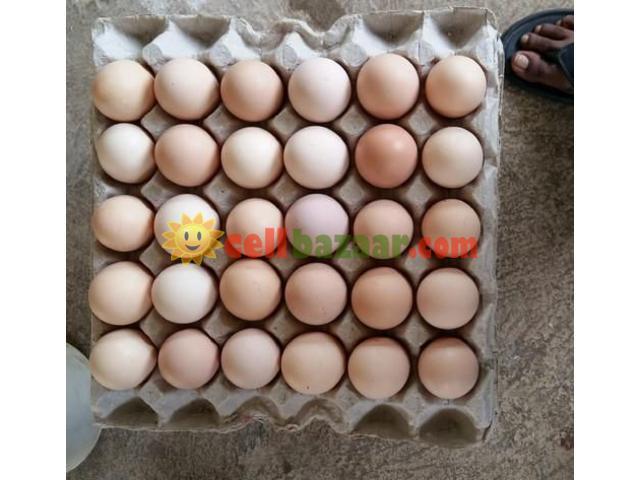 Hatching Egg Boiler - 2/3