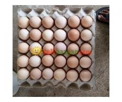 Hatching Egg Boiler - Image 2/3