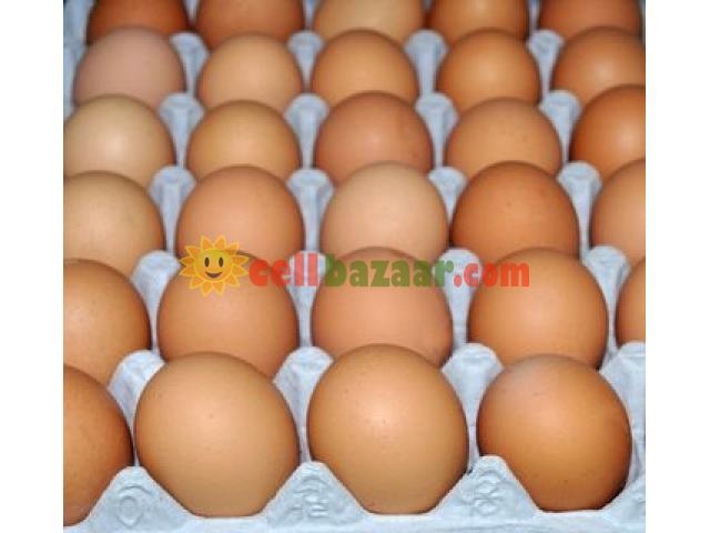 Hatching Egg Boiler - 3/3