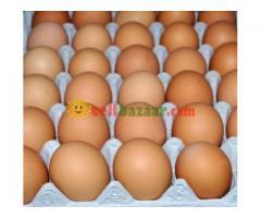 Hatching Egg Boiler - Image 3/3
