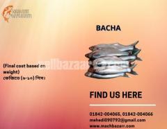 BACHA MACH