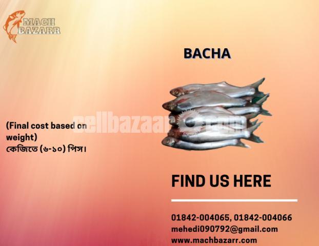 BACHA MACH - 1/2