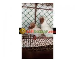 chondon pour jora bscha baby soho - Image 3/5
