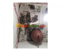 Turkey sale at jhenidah - Image 3/4