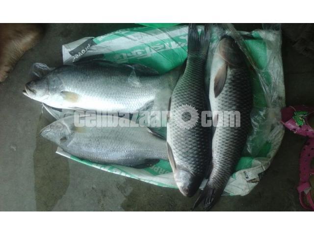 Vatki Fish Pure Deshi - 1/2