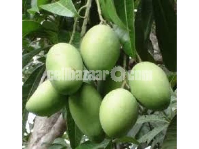 Mango of Rajshahi and Chapainawabgong - 5/5