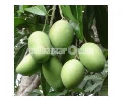 Mango of Rajshahi and Chapainawabgong - Image 5/5