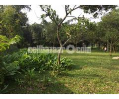 12 bigha land at bhatura