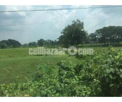 128 bigha land at voilor trishal