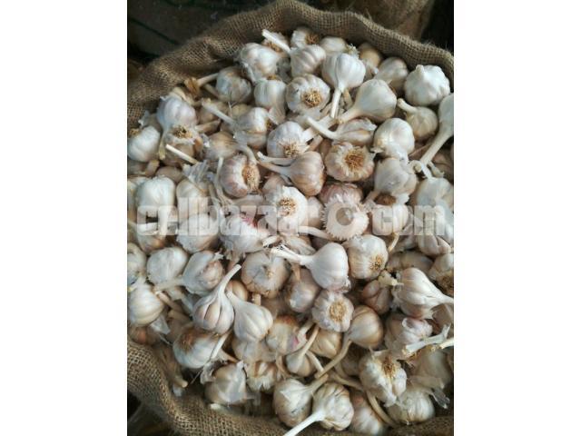 Fresh Indian Garlic - 1/2
