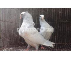 For sale one pair silver mukkhi baby