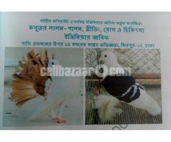 Pigeon disease& treatment Book