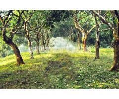 Land for Fruits Garden/Tourism Resort / Amusement Park