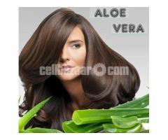Aloe Vera Leaves 4pcs⭐অবিশ্বাস্য উদ্ভিদ