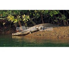Sundarbon Tour